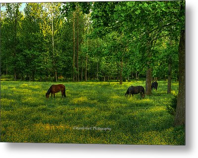 Grazing Metal Print by Paul Herrmann