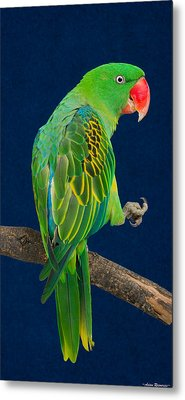 Metal Print featuring the photograph Great-billed Parrot 1 by Avian Resources