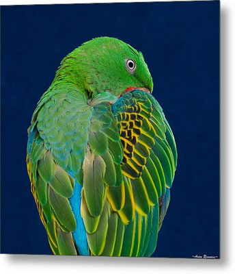 Metal Print featuring the photograph Great-billed Parrot 2 by Avian Resources