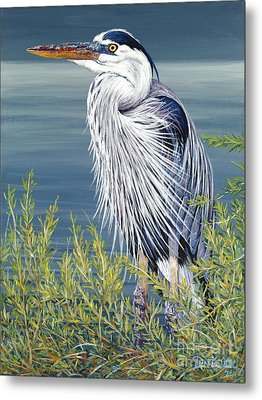 Great Blue Metal Print by Danielle  Perry