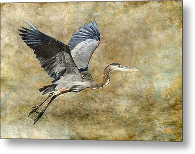 Great Blue Heron 2 Metal Print