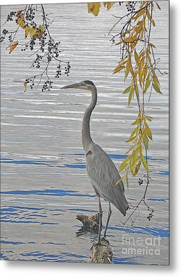 Metal Print featuring the photograph Great Blue Heron by Ann Horn