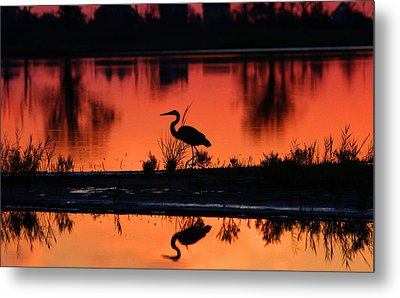 Great Blue Heron At Sunrise Metal Print