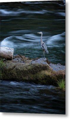 Great Blue Heron Metal Print