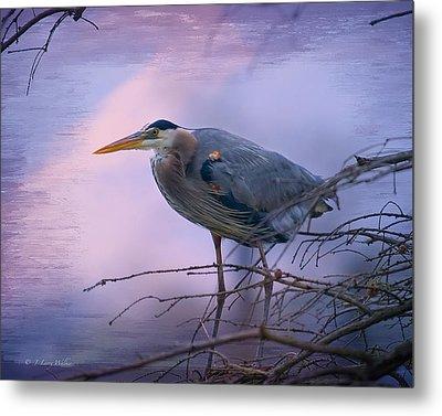 Great Blue Heron Fishing Metal Print by J Larry Walker