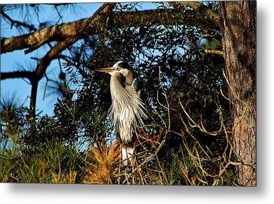 Great Blue Heron In A Tree - # 23 Metal Print by Paulette Thomas