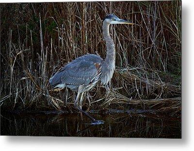 Great Blue Heron In The Marsh - #1 Metal Print by Paulette Thomas