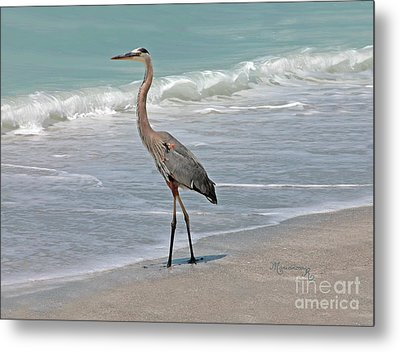 Great Blue Heron On Beach Metal Print by Mariarosa Rockefeller