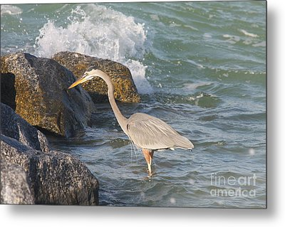 Great Blue Heron On The Prey Metal Print by Christiane Schulze Art And Photography