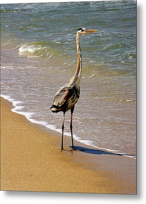 Great Blue Heron On The Surf. Metal Print by Chris  Kusik