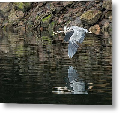 Metal Print featuring the photograph Great Blue Heron Reflections by Jennifer Casey