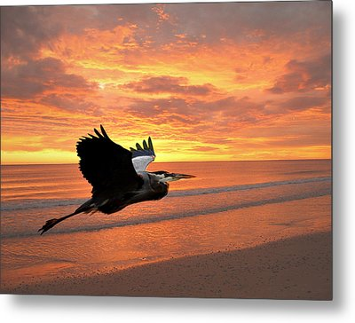 Great Blue In Flight 5 Metal Print by Marty Koch