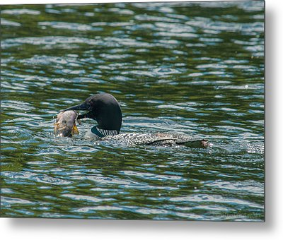 Metal Print featuring the photograph Great Catch by Brenda Jacobs