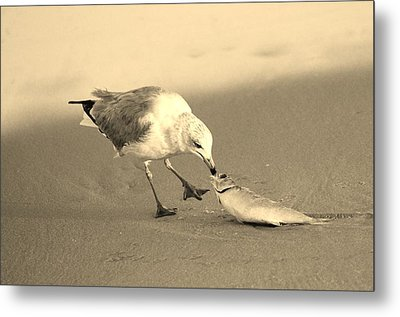 Metal Print featuring the photograph Great Catch With Fish by Cynthia Guinn