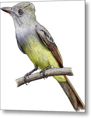 Great Crested Flycatcher Metal Print by Roger Hall
