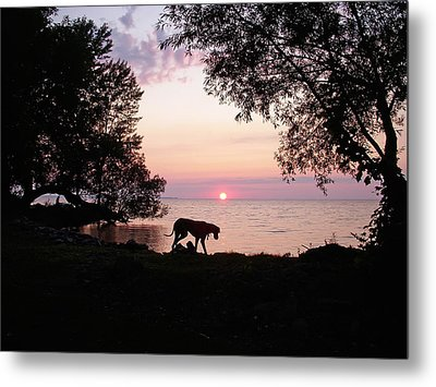 Metal Print featuring the photograph Great Dane Sunset by Aimee L Maher Photography and Art Visit ALMGallerydotcom