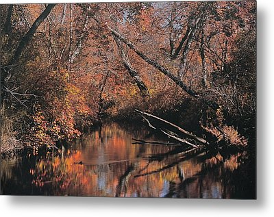 Great Egg Harbor River Metal Print by Greg Vizzi