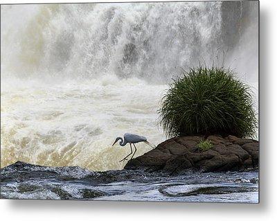 Great Egret At Iguazu Falls Metal Print