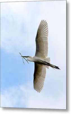 Great Egret In Flight Metal Print by Richard Bryce and Family