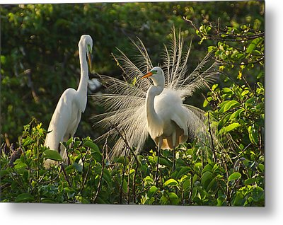 The Courtship Dance Metal Print