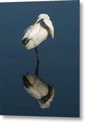 Great Egret Reflection 16x20 Metal Print