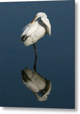 Great Egret Reflection 8x10 Metal Print