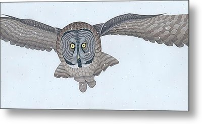 Great Gray Owl Metal Print by Nathan Marcy