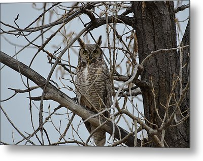 Great Horn Perched Metal Print
