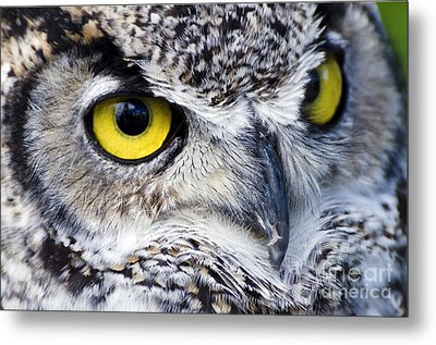 Great Horned Closeup Metal Print by Dee Cresswell