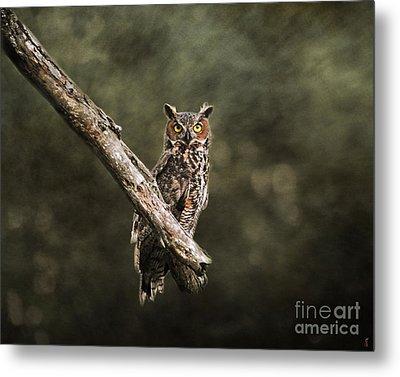 Great Horned Owl I Metal Print by Jai Johnson
