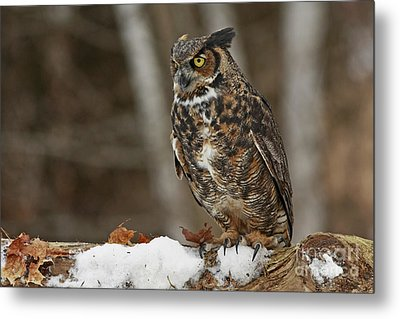 Great Horned Owl In A Snowy Winter Forest Metal Print by Inspired Nature Photography Fine Art Photography