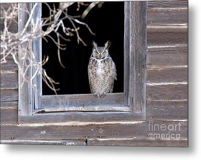 Great Horned Owl Metal Print by Jim Zipp