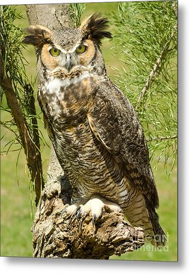 Great Horned Owl Metal Print by JRP Photography