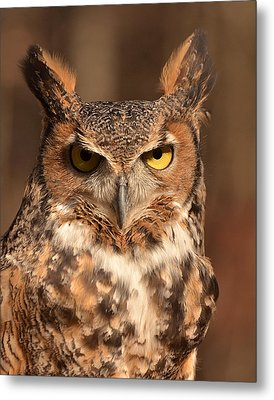 Great Horned Owl Metal Print by Nancy Landry