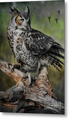 Great Horned Owl On Branch Metal Print