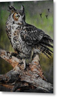Great Horned Owl On Branch Metal Print by Deborah Benoit