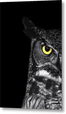 Great Horned Owl Photo Metal Print by Stephanie McDowell