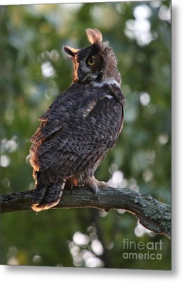 Great Horned Owl Profile Metal Print