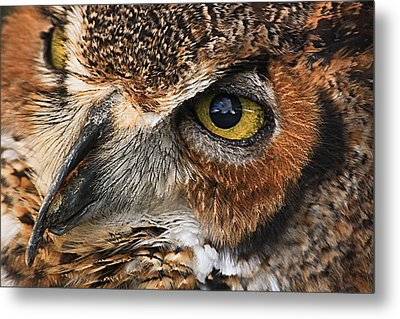 Great Horned Owl Metal Print by Tammy Schneider