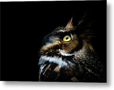 Great Horned Owl Metal Print by Tracy Munson