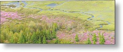 Great Meadow Flowers Blooming In Acadia National Park Metal Print by Keith Webber Jr