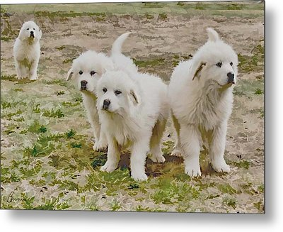 Great Pyranese Puppies Metal Print by Bonnie Willis