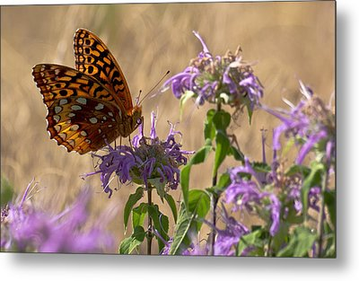 Great Spangled On Bee Balm Metal Print by Shelly Gunderson