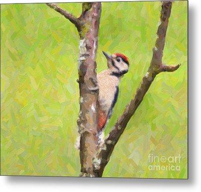 Great Spotted Woodpecker Metal Print by Liz Leyden