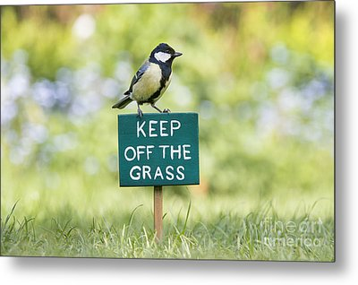 Great Tit On A Keep Off The Grass Sign Metal Print by Tim Gainey