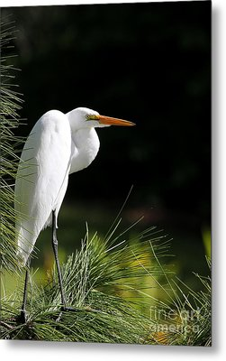 Great White Egret In The Tree Metal Print by Sabrina L Ryan
