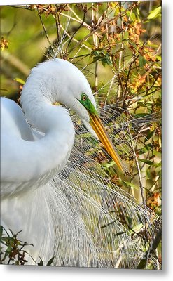 Great White Egret Portrait Metal Print