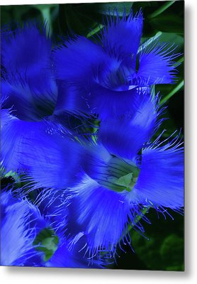Metal Print featuring the photograph Greater Fringed Blue Gentian by Gregory Scott