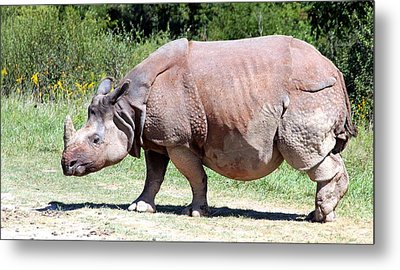 Greater One-horned Asian Rhino Metal Print by Laurel Talabere