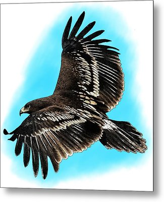 Greater Spotted Eagle Metal Print by Roger Hall